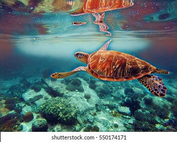 Digital illustration - Sea turtle in water. Swimming animal painting style picture in blue. Seashore life: coral reef, stones at sea bottom, sea plants. Sea turtle in the water paint brush image