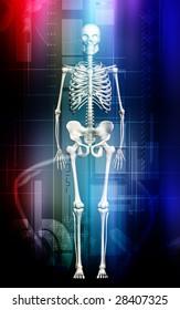 Digital illustration of a Skelton in colour  background