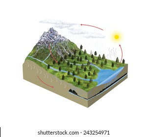 Digital illustration of water cycle