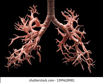 Digital medical illustration depicting the bronchi and trachea of the human respiratory system. 3D rendering