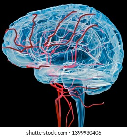Digital medical illustration: Lateral (side) x-ray view (orthogonal) of human brain with blood vessels. Anatomically correct, isolated on black. 3D rendering