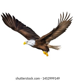 Digital painting of bald eagle flying illustration isolated in white background