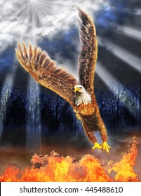A Digital Painting of  Bald Eagle Flying out of Flames and into the Bright Light.