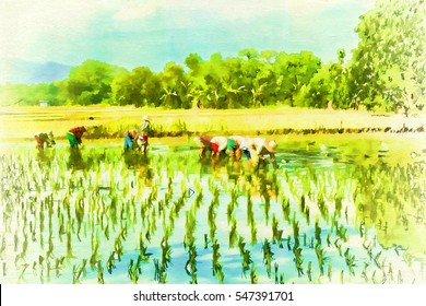 Digital painting farmers planting rice on rice fields