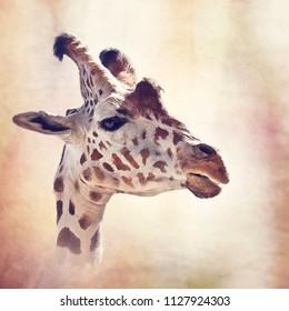 digital painting of giraffe portrait