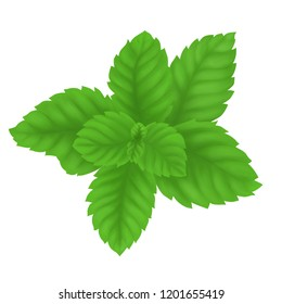 Digital painting pepper mint leaves isolated on white background, herb and medical concept