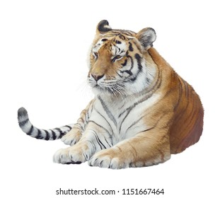 Digital Painting Of tiger portrait isolated on white background