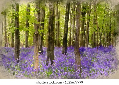 Digital watercolor painting of Beautiful carpet of bluebell flowers in Spring forest landscape