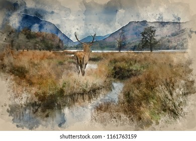 Digital watercolor painting of Beautiful red deer stag looks out across lake towards mountain landscape in Autumn scene