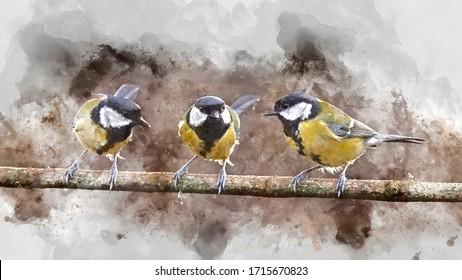 Digital watercolor painting of Beautiul Great Tit bird Parus Major on branch in Spring sunshine in garden