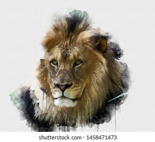 Digital watercolor painting of Lion. Digital art. Digital watercolour painting of Beautiful image of a Lion King relaxing on a warm day. Isolated painting of Brown lion. Abstract Animal Wallpaper