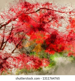 Digital watercolor painting of Stunning colorful vibrant red and yellow Japanese Maple trees in Autumn Fall forest