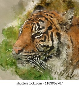 Digital watercolor painting of Stunning portrait of tiger Panthera Tigris walking through long grass in vibrant landscape
