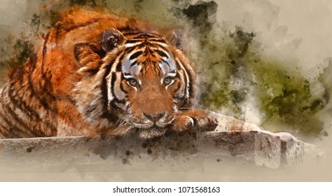 Digital watercolor painting of Stunning tiger relaxing on warm day with head on front paws