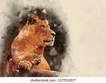 Digital watercolour painting of Beautiful image of a lioness relaxing on a warm day