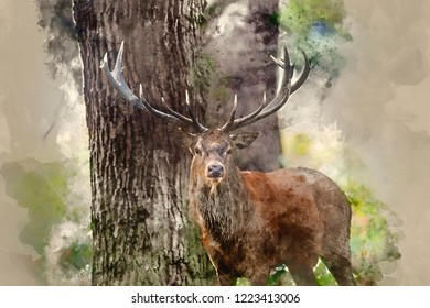 Digital watercolour painting of Majestic red deer stag Cervus Elaphus in forest landscape during rut season in Autumn Fall