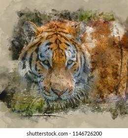 Digital watercolour painting of Portrait of Siberian Amur tiger Panthera Tigris Tigris in Summer