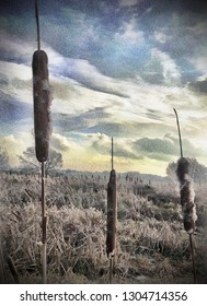 A digitally modified photo giving a colourful impression of a water colour painting. It illustrates the seed heads of reed mace growing in a wetland besides the River Idle near Bawtry, Yorkshire, UK.