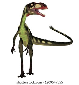 Dilong Dinosaur Front 3D illustration - Dilong was a carnivorous small theropod dinosaur that lived in China during the Cretaceous Period.