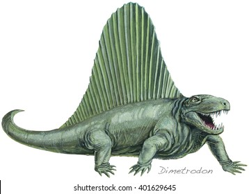 Dimetrodon A flesh-eating, early mammal-like reptile (not actually a dinosaur). About 11 ft (3-5 m) long. Permian, about 250 million years ago.