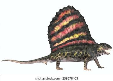 Dimetrodon Permian Reptile - Dimetrodon was a carnivorous mammal-like reptile which lived in the Permian Era of North America and Europe.