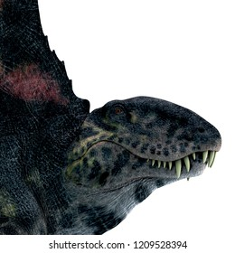 Dimetrodon Reptile Head 3D illustration - Dimetrodon was a sail-back carnivorous dinosaur that lived in North America and Europe during the Permian Period.