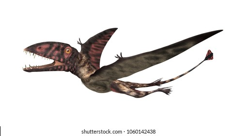 The Dimorphodon was an extinct flying reptile that lived during the Jurassic period - 3D render.