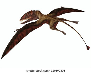 Dimorphodon on White - Dimorphodon was a carnivorous flying Pterosaur that lived in the Jurassic Period of England.