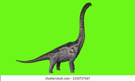 Dinosaur Braquiossauro on green screen. 3D Rendering.