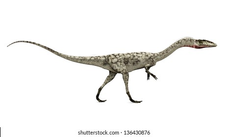 Dinosaur Coelophysis Computer generated 3D illustration