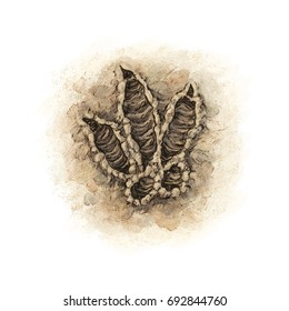 Dinosaur footprint fresh track on soil - color illustration white (no background)