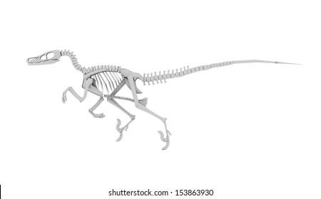 Dinosaur skeleton concept rendered on white background