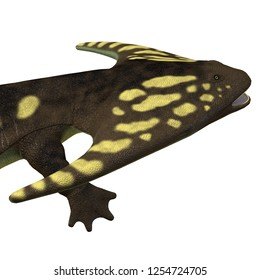 Diplocaulus Amphibian Head 3D illustration - Diplocaulus was an amphibian that lived in the Permian Period of North America and Africa.