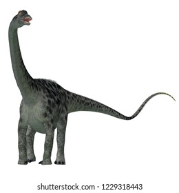 Diplodocus Dinosaur Tail 3D illustration - Diplodocus was a sauropod herbivorous dinosaur that lived in North America during the Jurassic Period.