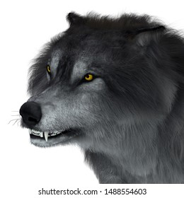Dire Wolf Head 3D illustration - The carnivorous Dire Wolf lived in North and South America during the Pleistocene Period.