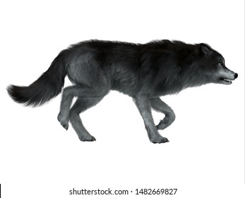 Dire Wolf Side Profile 3d illustration - The carnivorous Dire Wolf lived in North and South America during the Pleistocene Period.