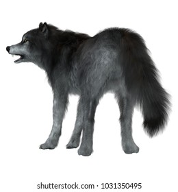 Dire Wolf Tail 3d illustration - The Dire Wolf was a prehistoric carnivore that lived in North and South America during the Pleistocene Period.