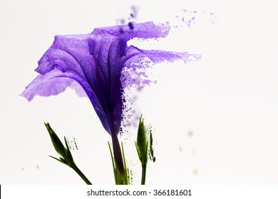 Dispersion Purple Flower