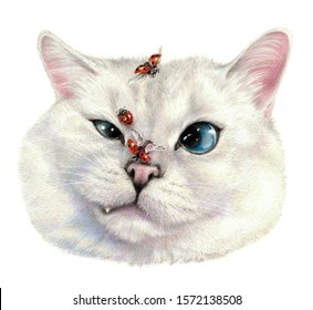 Dissatisfied cat, ladybugs fly around. Color sketch of a cat's face.