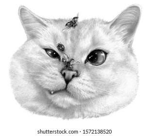 Dissatisfied cat, ladybugs fly around. Monochrome sketch of a cat's face. Isolated on white background. Pencil drawing art work