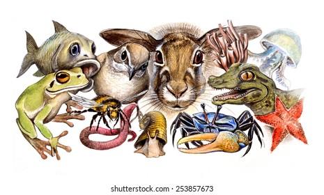 生物の多様性