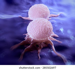 Dividing breast cancer cell.It is in the telophase stage of cell division.Cancerous breast cells form tumours, which possess the ability to invade surrounding tissues.