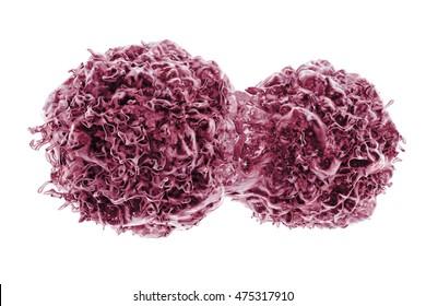 Dividing cancer cells, 3D illustration