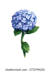 DIY Wall Art Print, Watercolor, Hydrangea Print, Botanical Print, Digital Prints, Print, Botanical, Wall Art, Poster, Digital Prints