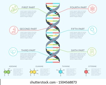 DNA infographic. Genetic spiral, genomic model molecule diagram and adn pattern structure chart. Medicine molecular rna, chromosome infographics or dna gene scientific  concept illustration