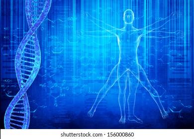 DNA molecules and virtuvian man