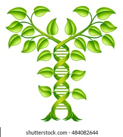 DNA Plant Double Helix Concept, can refer to alternative medicine, crop gene modification or other healthcare or medical theme.