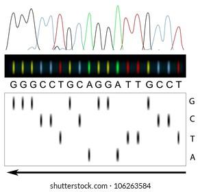 DNA sequencing principle