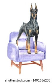 Doberman of a dog. Watercolor hand drawn illustration. Watercolor Doberman stand on sofa chair layer path, clipping path isolated on white background.