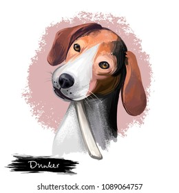 dog, animal, puppy, biology, fauna, pet, cute, sweet, fluffy, friend, breed, kennel club, doggy, doggie, animalia, canis lupus familiaris, mammal, domestic, domesticated, drawing, art, artwork, hand d